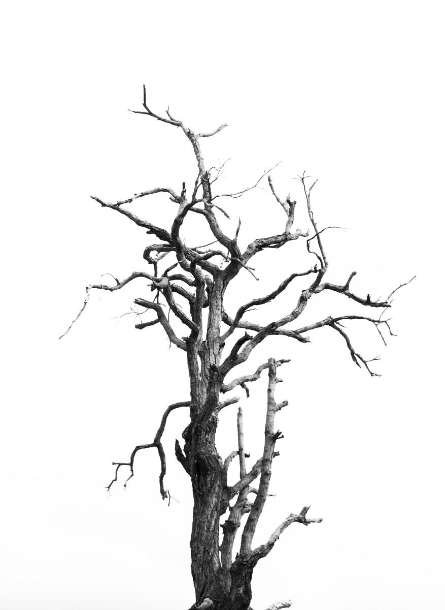 Nature - Arbre Mort