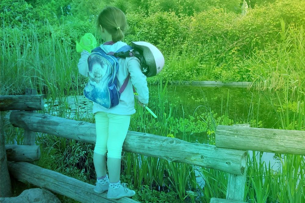 aqualis - Chasse aux libellules