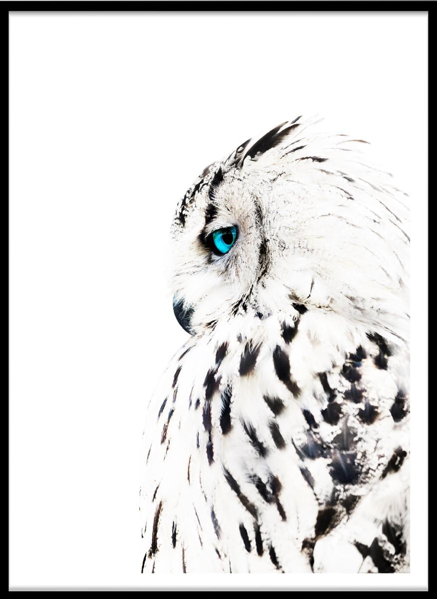 Animaux - Le Hibou Blanc