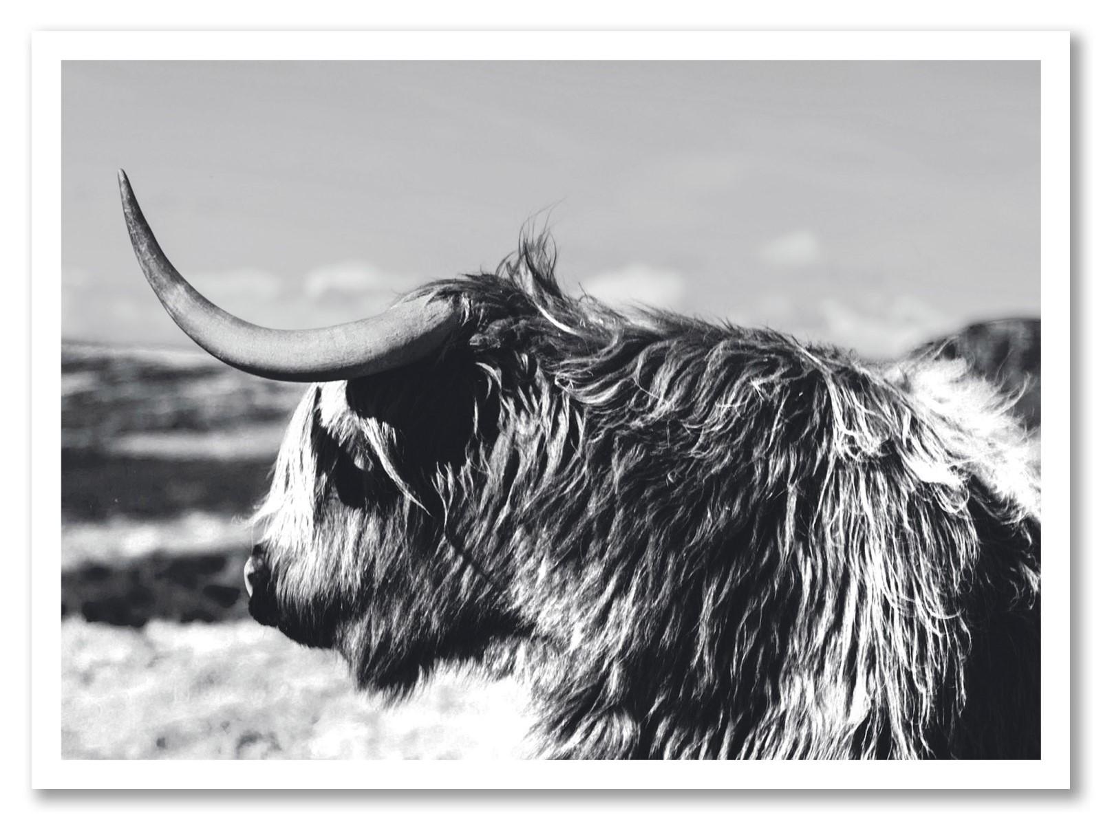 Animaux - Le Yak