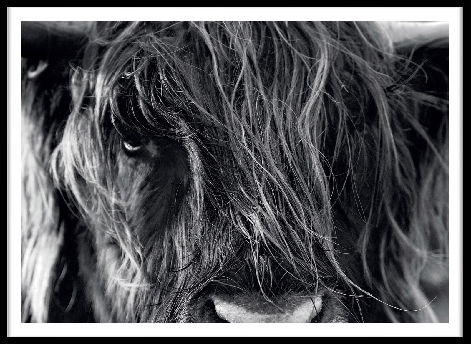 Animaux - La pose du Yak