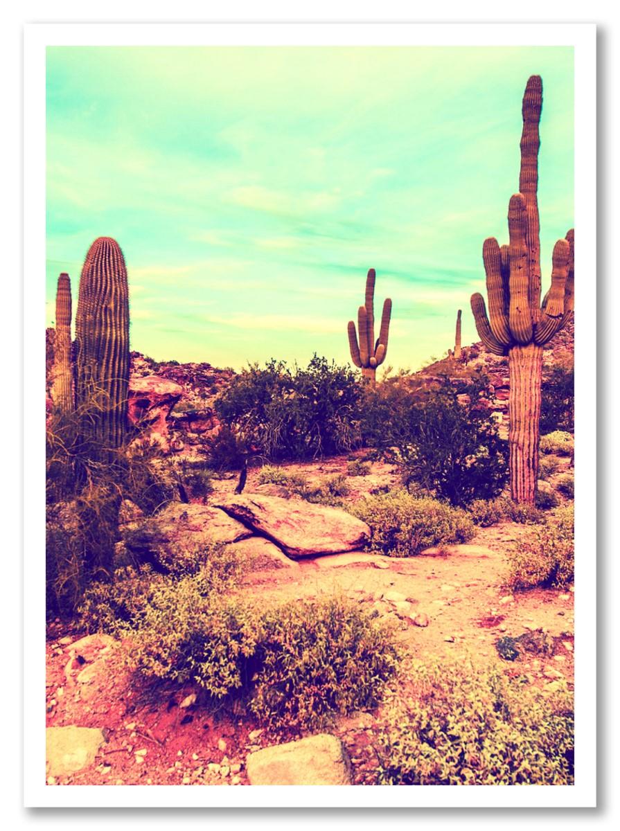 Cactus - Canyon