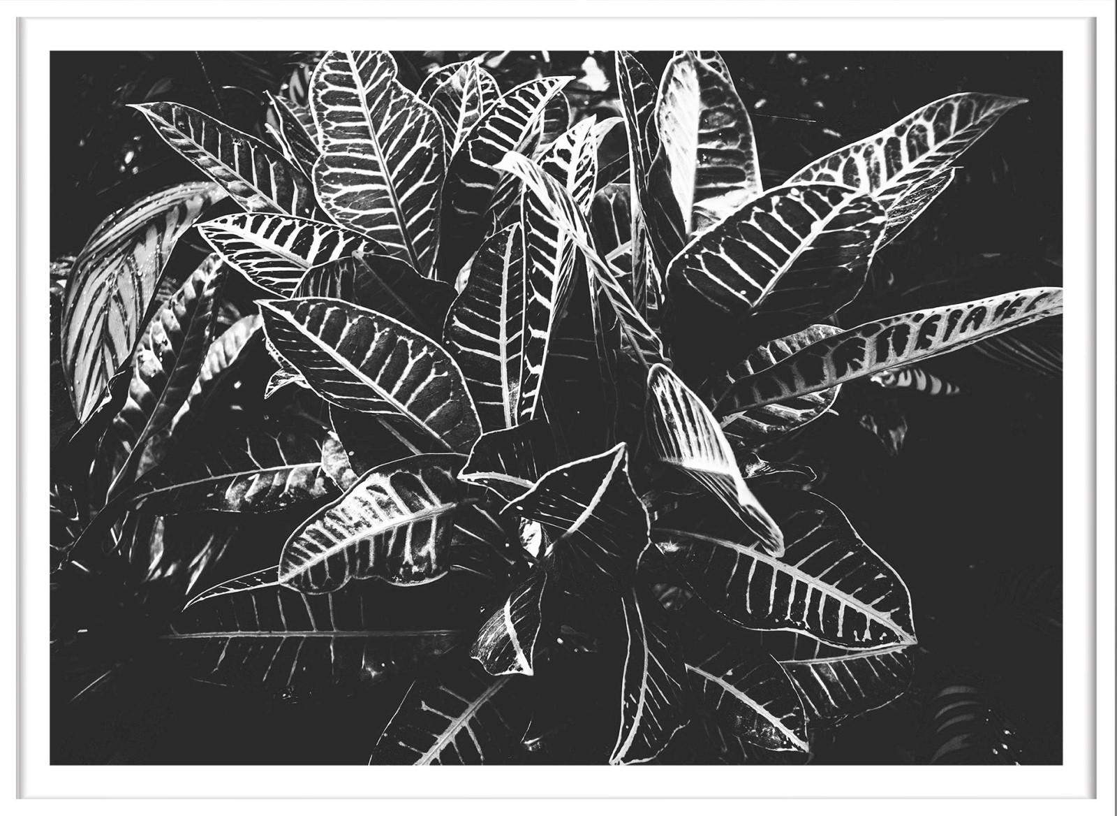 Séjour - Feuille Noir et Blanc