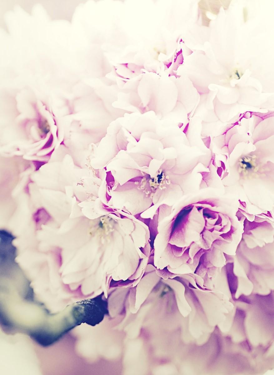 Nature - Bouquet de fleurs roses