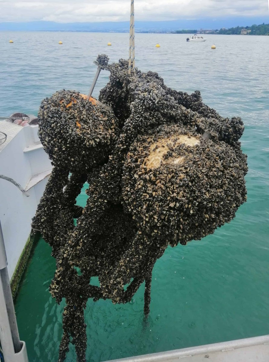 Instrument de mesure scientifique entièrement colonisé par la moule quagga après une année d'immersion dans le lac à la profondeur de 8 mètres