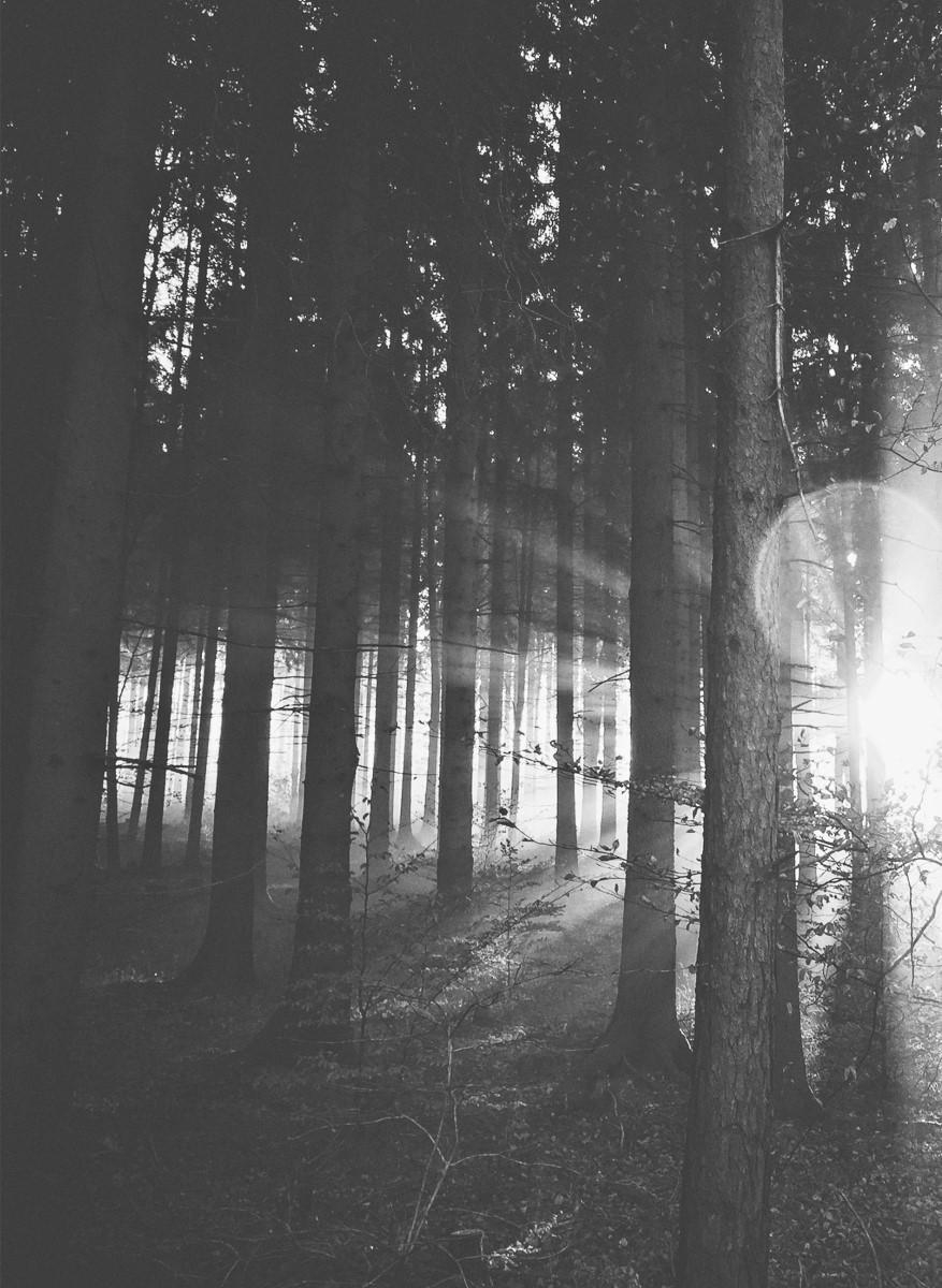 Nature - Arbre et Forêt Noir et blanc