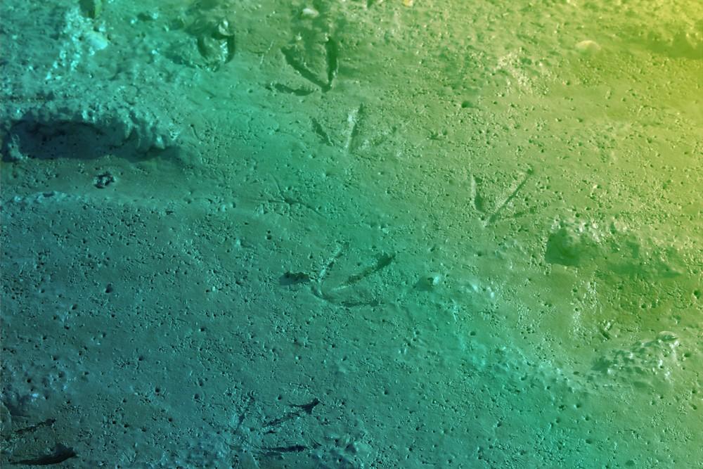 aqualis - empreintes d'oiseaux dans le sable