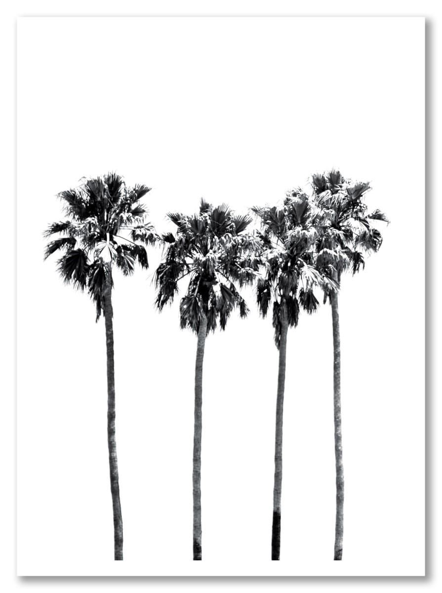 Botanique - Palmiers