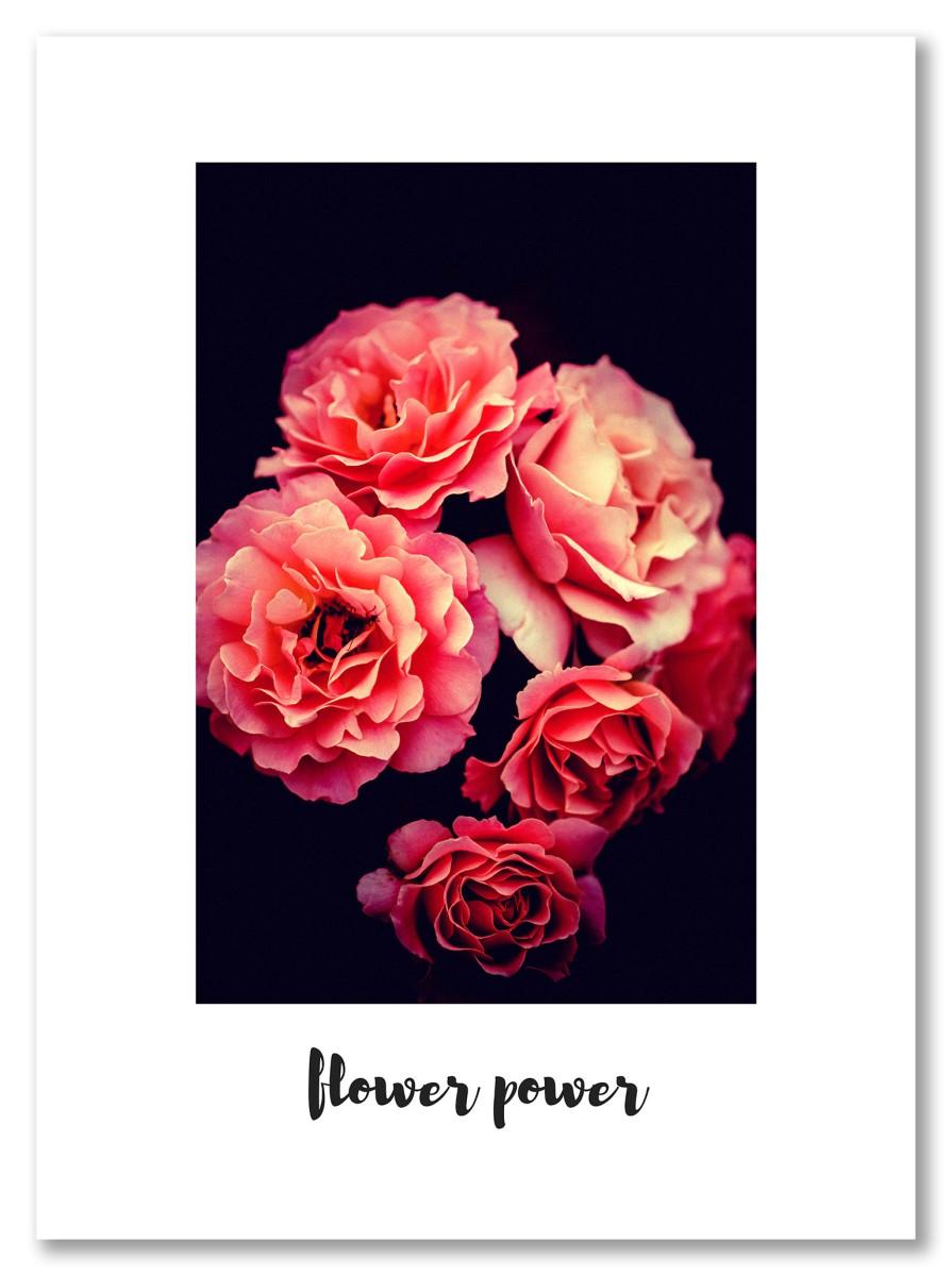Fleurs - Flower Power