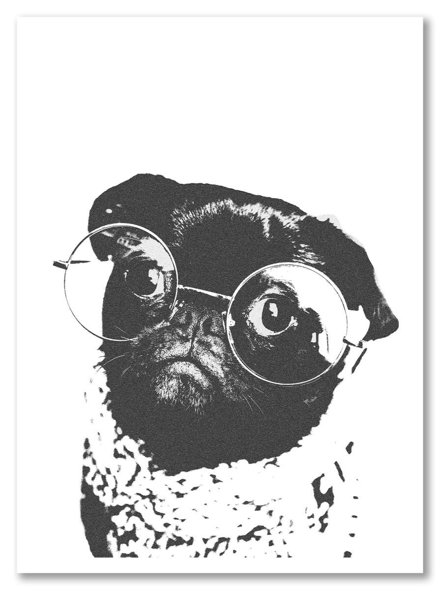 Animaux - Bulldog noir et blanc