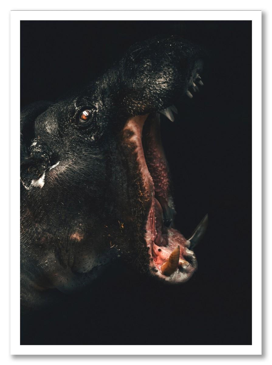 Animaux - Hippopotame