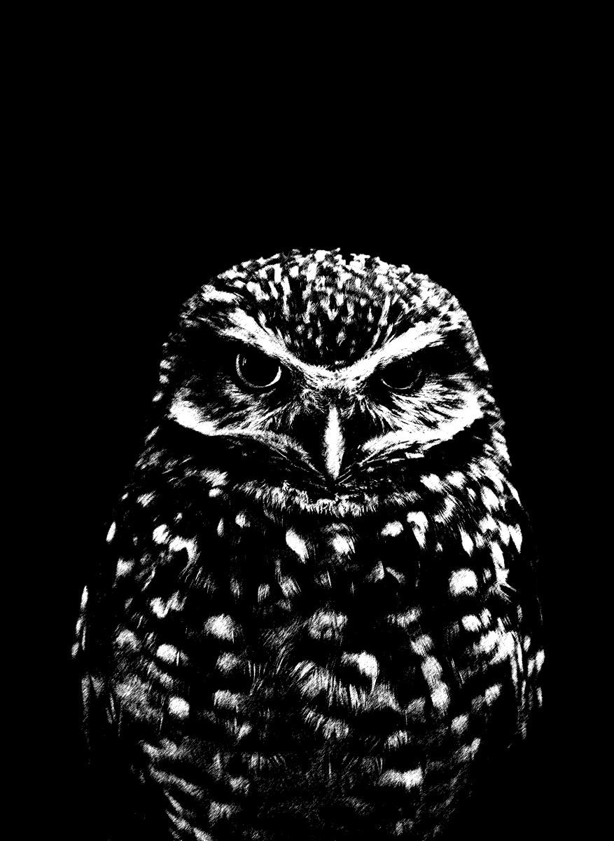 Animaux - Hibou noir