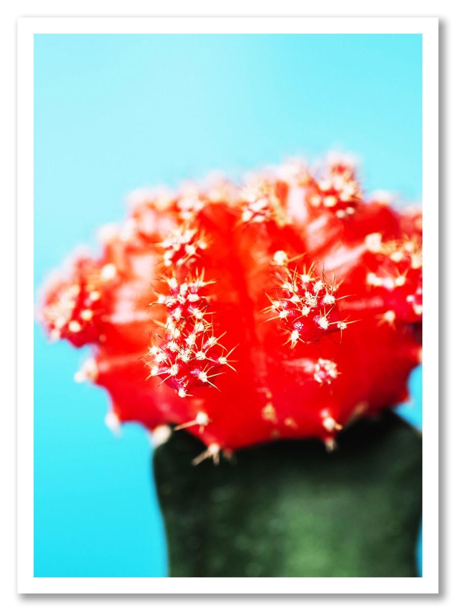 Cactus - Rouge