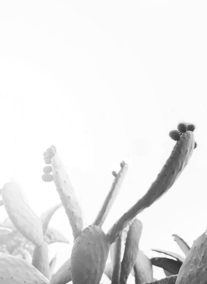 Nature - Cactus Nuage Blanc