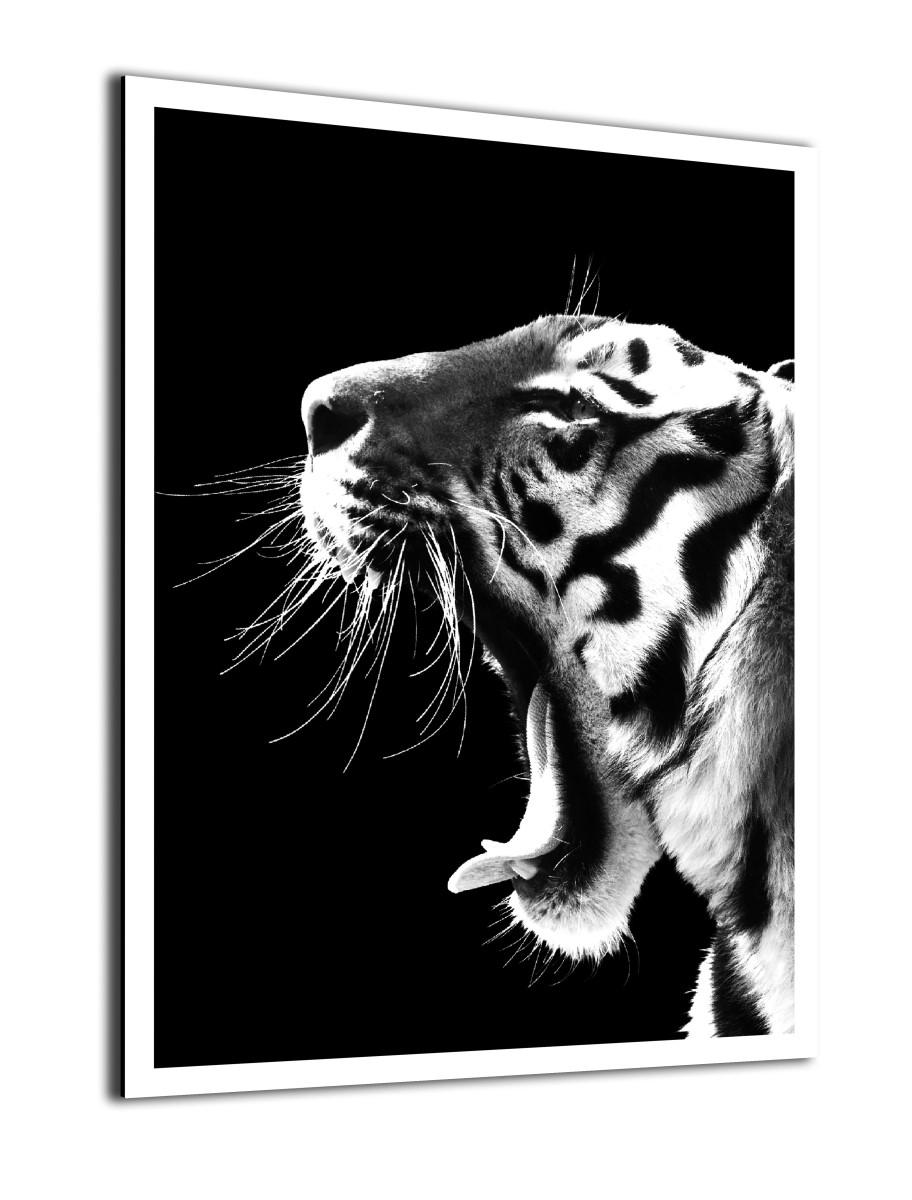 Animaux - Le Cri du Tigre