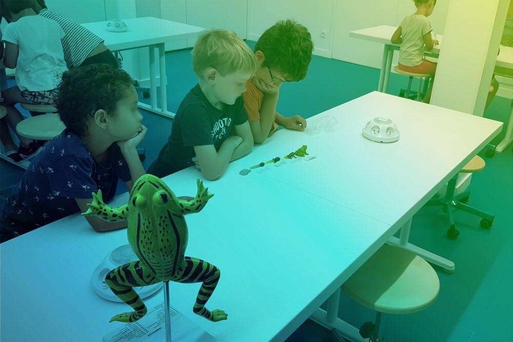 aqualis - à la découverte des oeufs de grenouilles