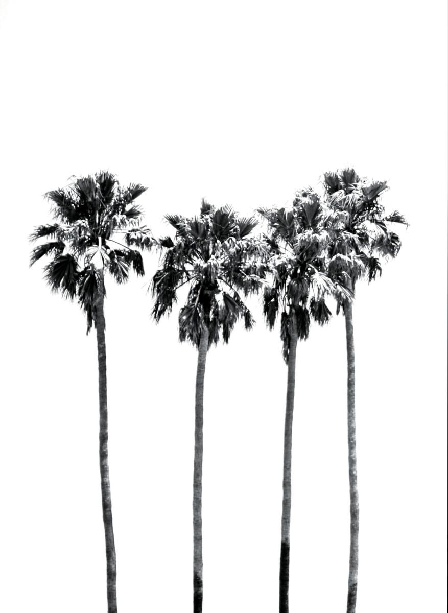 Nature - Palmiers