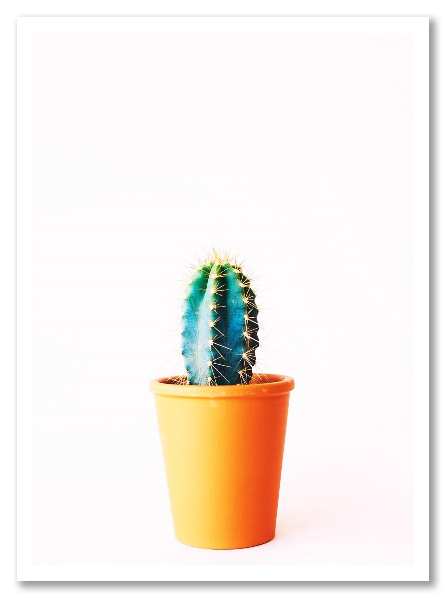 Cactus - Petit Pot de Cactus 1