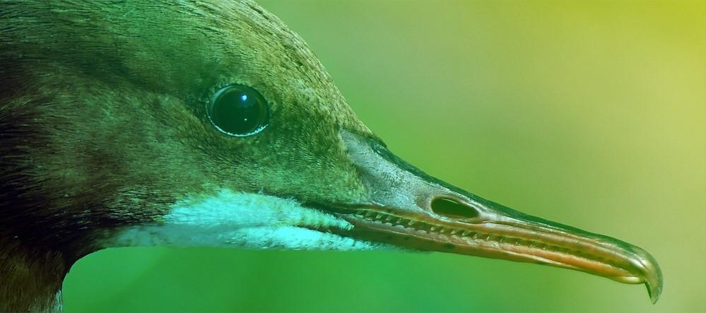 aqualis - un oiseau bien outillé