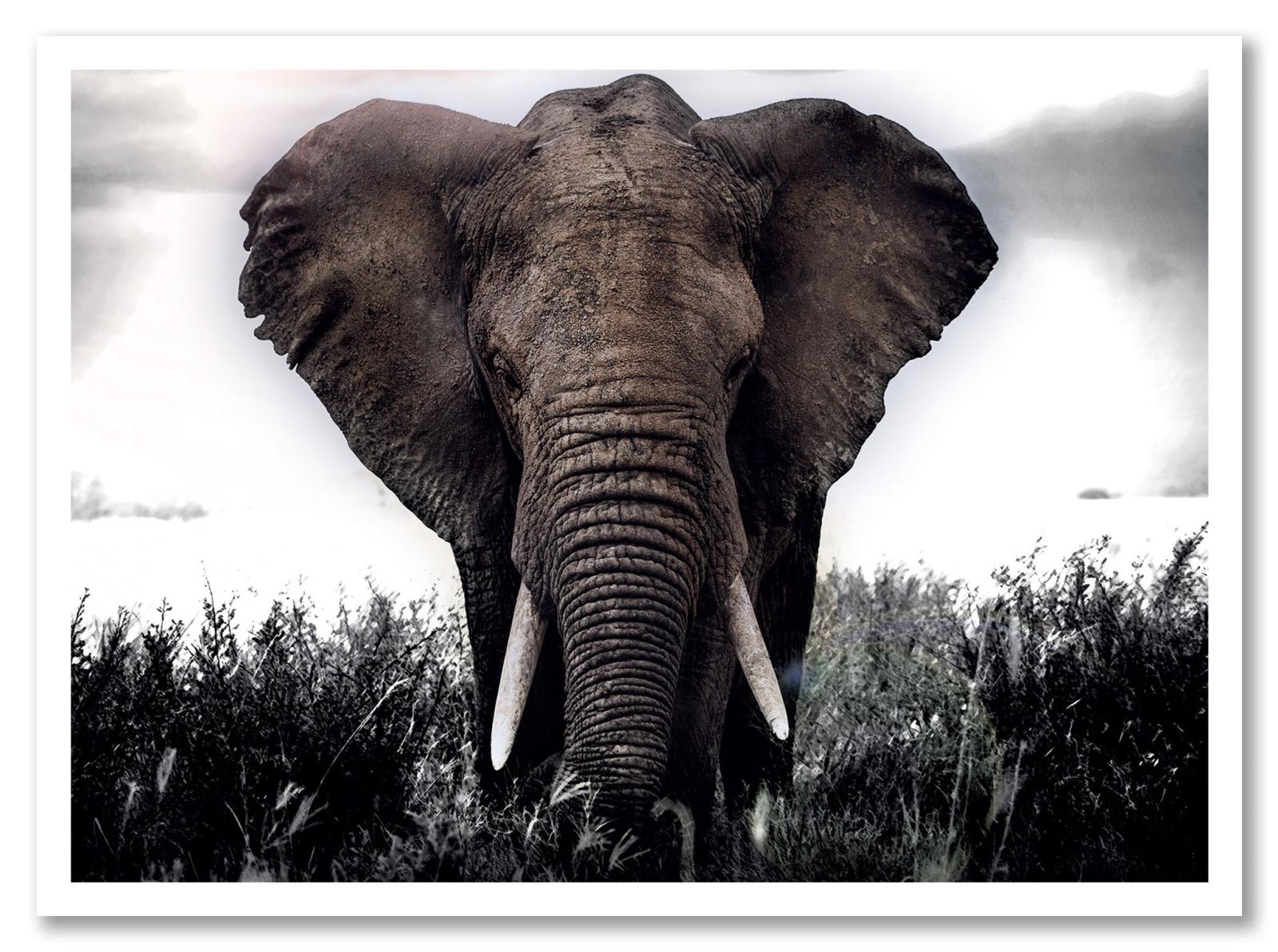 Animaux - Elephant