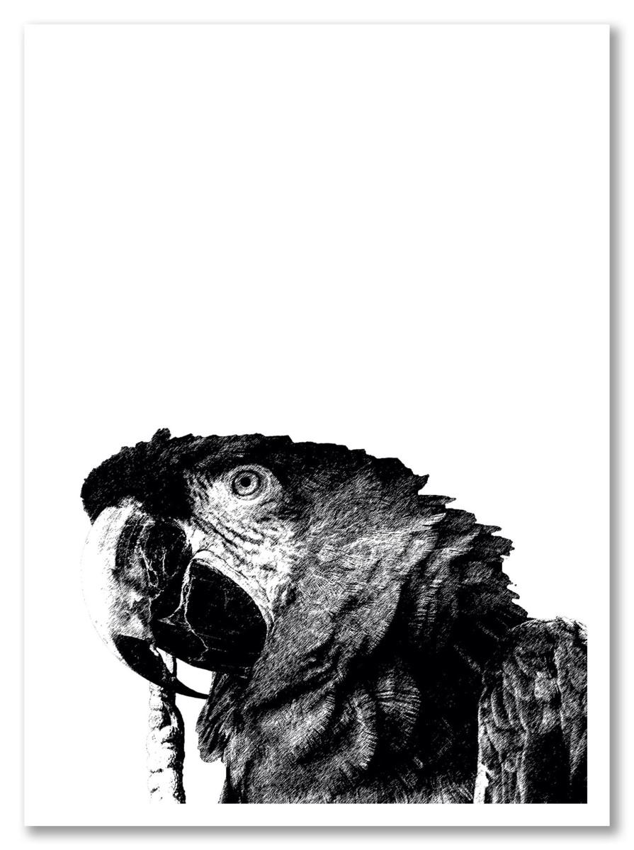 Séjour moderne - Perroquet