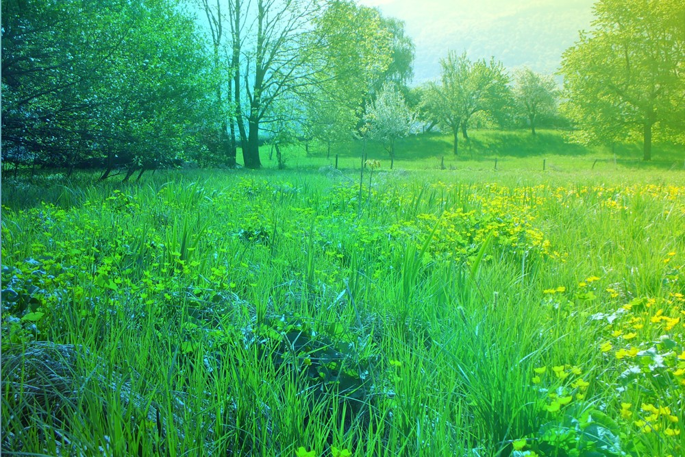 Les marais et les roselières