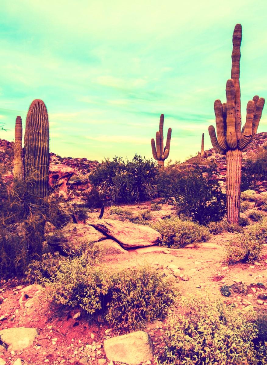 Nature - Cactus Canyon