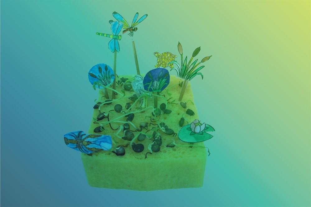 ©Aqualis - Eponge symbole des marais et de leur capacité de rétention de l'eau