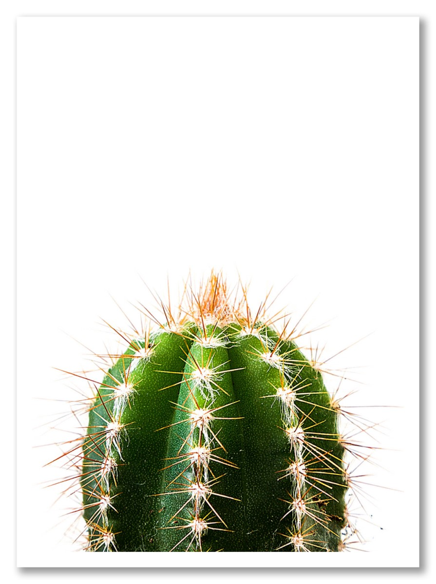Cactus - Le Minimaliste Vert