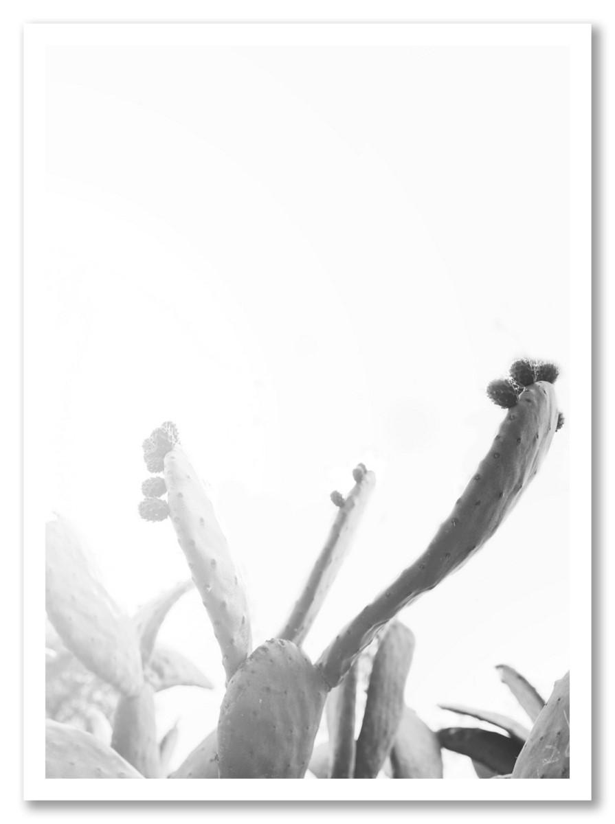 Cactus - Nuage Blanc