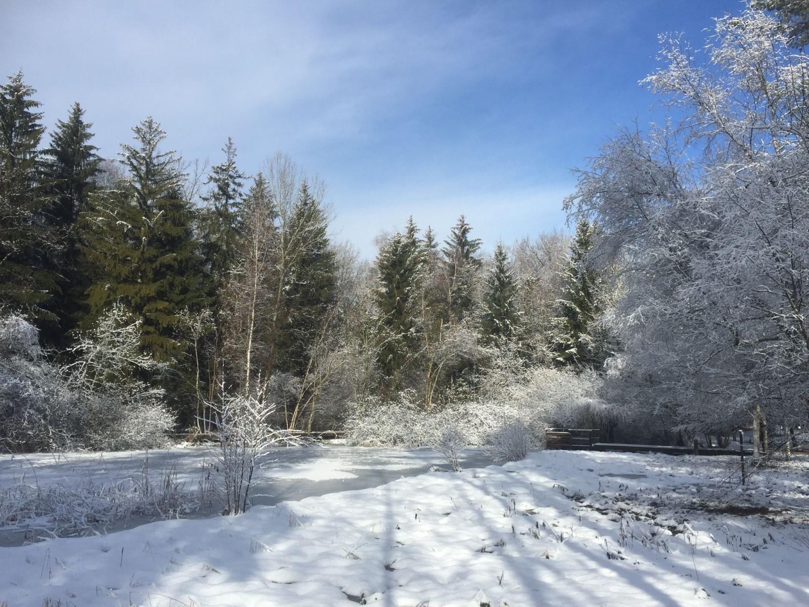 étang sous la neige - Activhandi Marc M.
