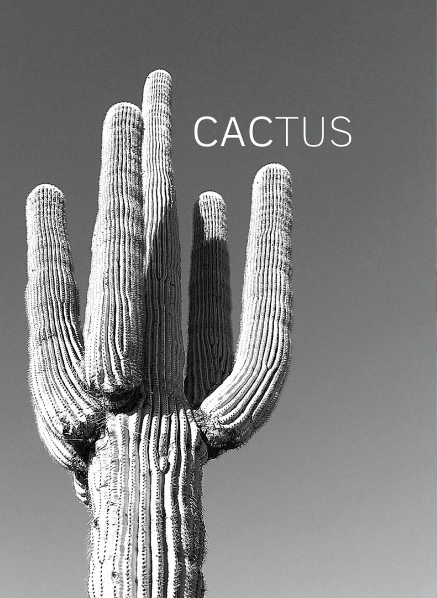 Nature - Cactus Noir