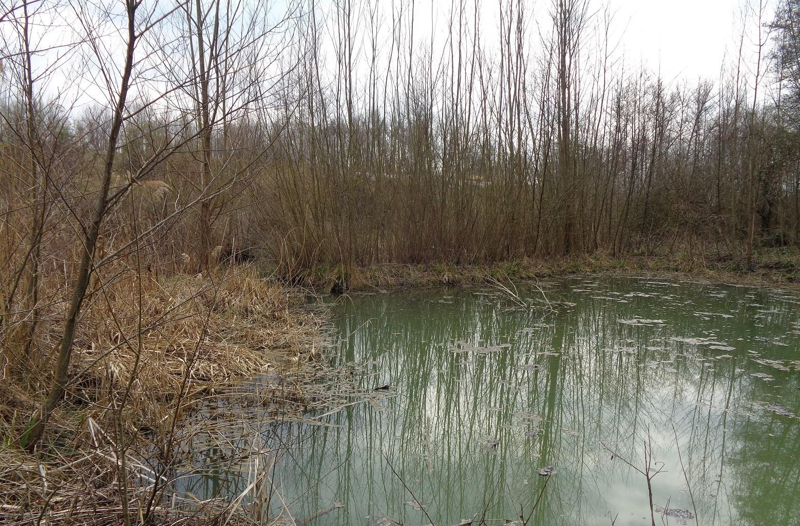 Zone humide classée Natura 2000 attenante à la Deysse