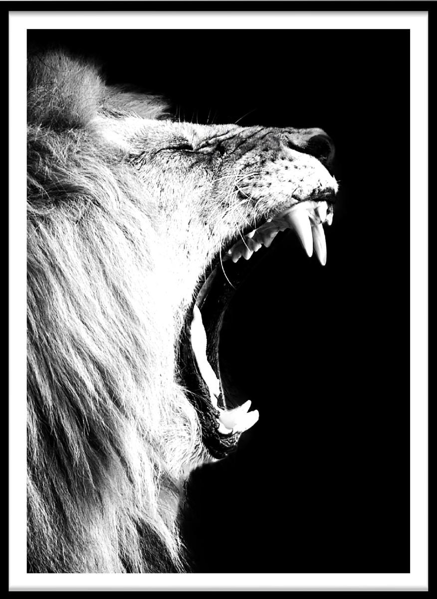 Animaux - Le Cri du Lion