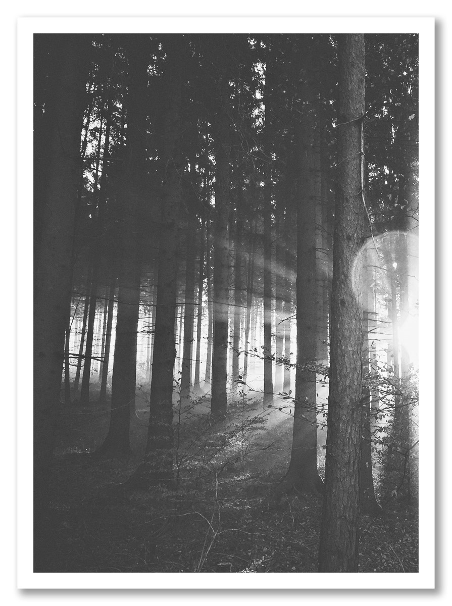 Botanique - Arbre et Forêt Noir et blanc
