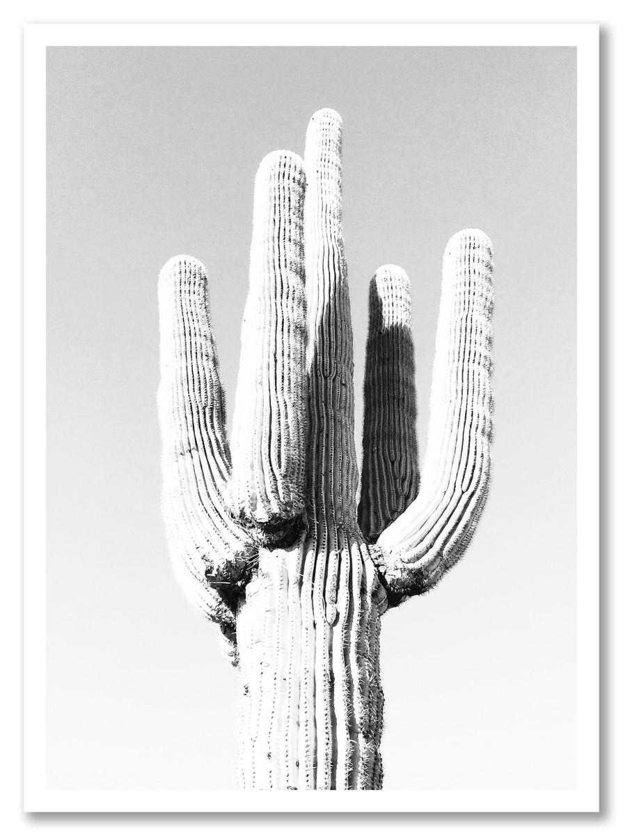 Cactus - Noir et Blanc 2