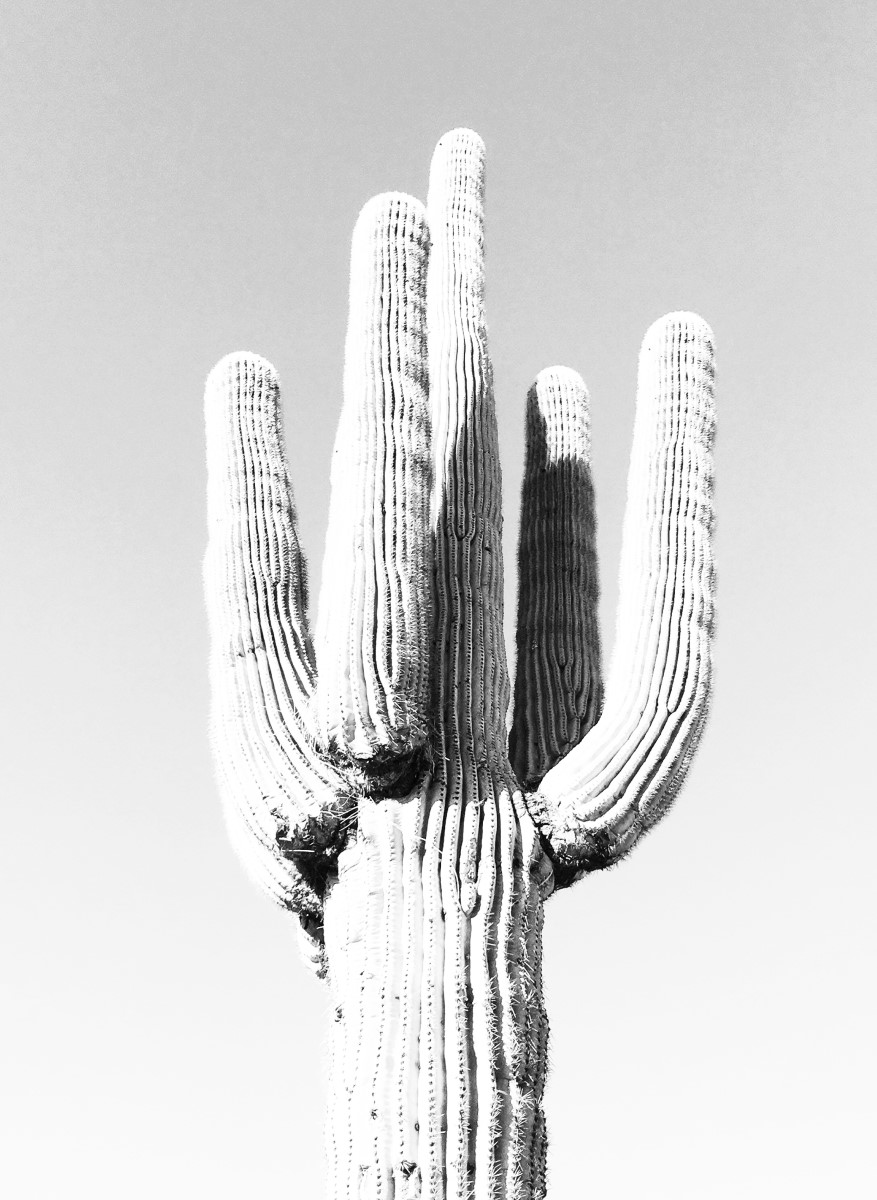 Nature - Cactus Black and White