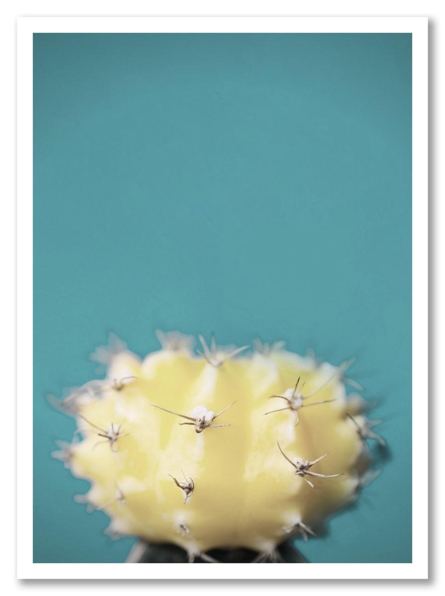 Cactus - Blanc