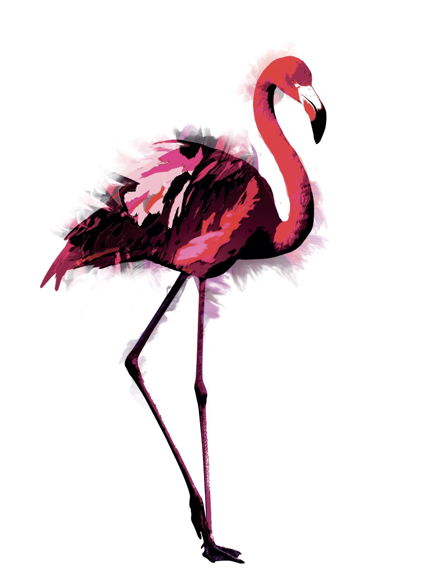Animaux - Flamant Rose