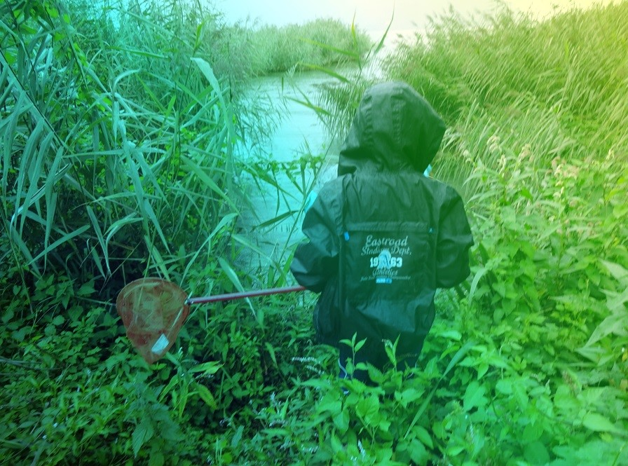 aqualis - En quête de libellules