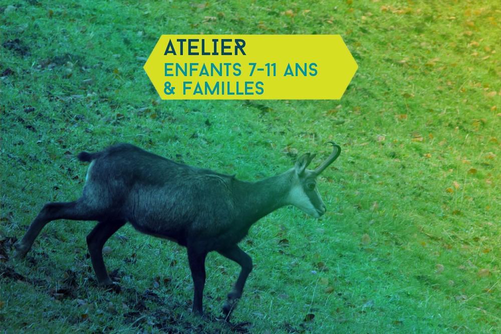 Les animaux des forêts du lac du Bourget