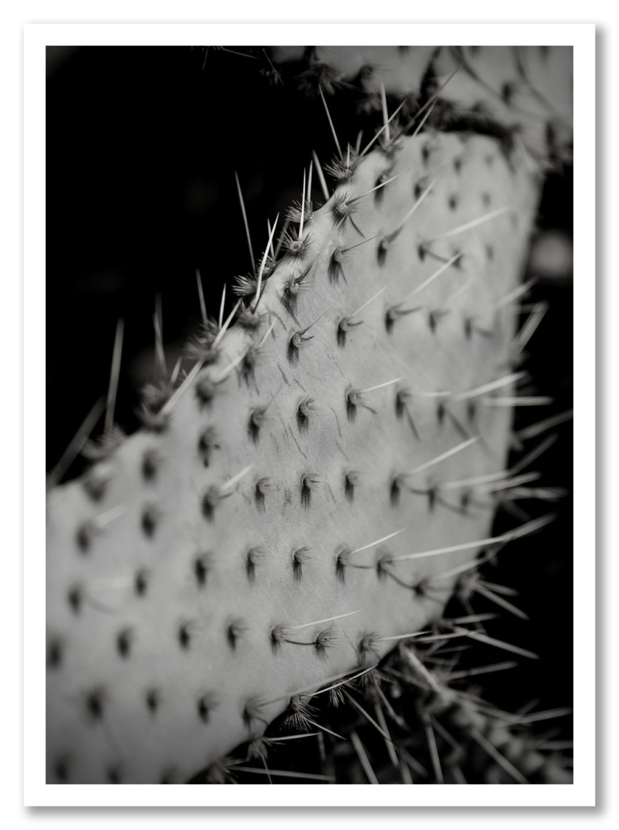 Cactus - Epineux