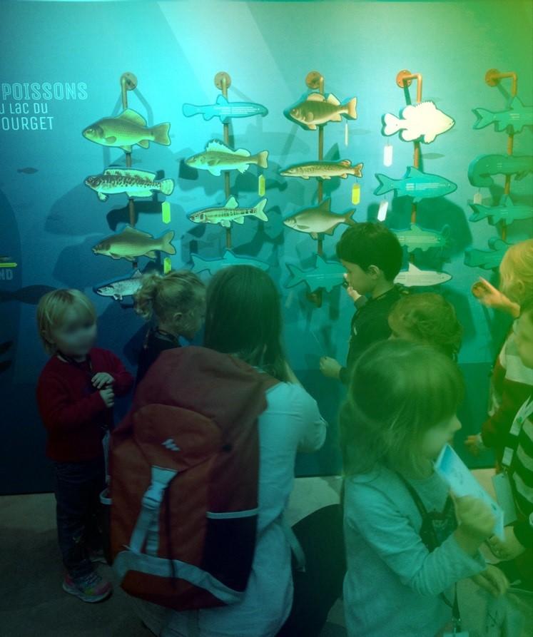 aqualis - Découvrir les poissons du lac