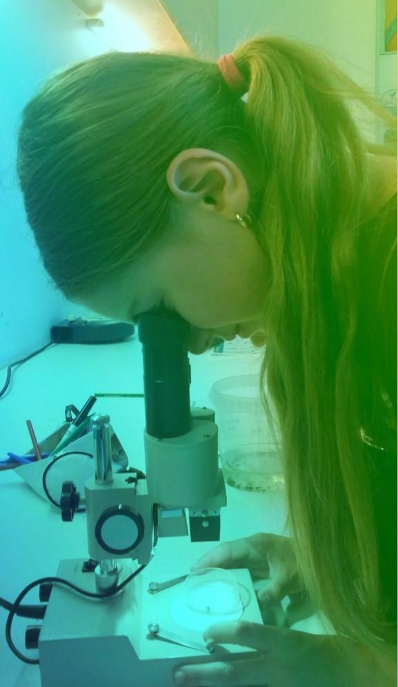 aqualis - Observation en laboratoire