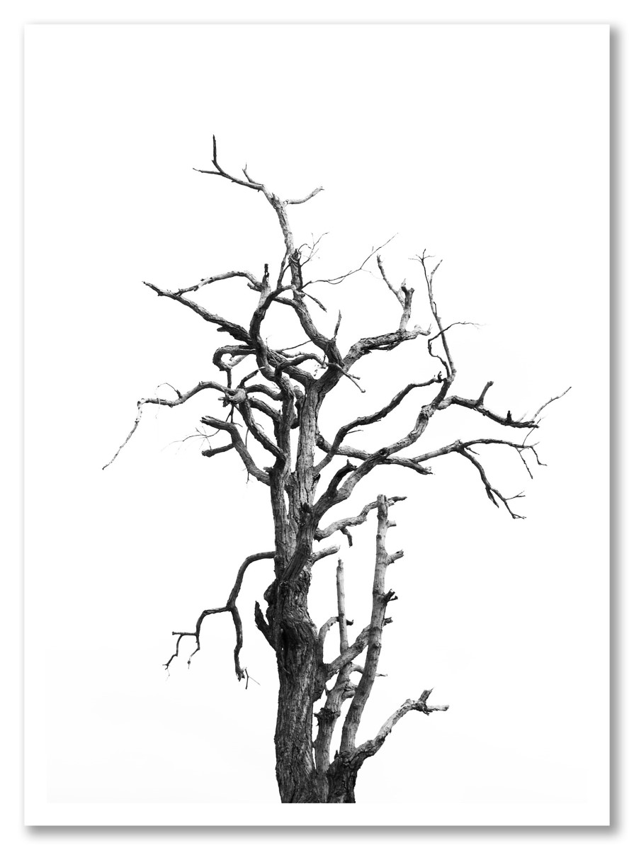 Botanique - Arbre mort