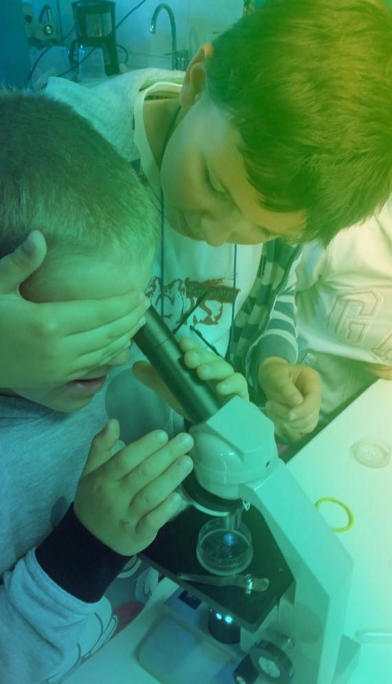 aqualis - observation au microscope
