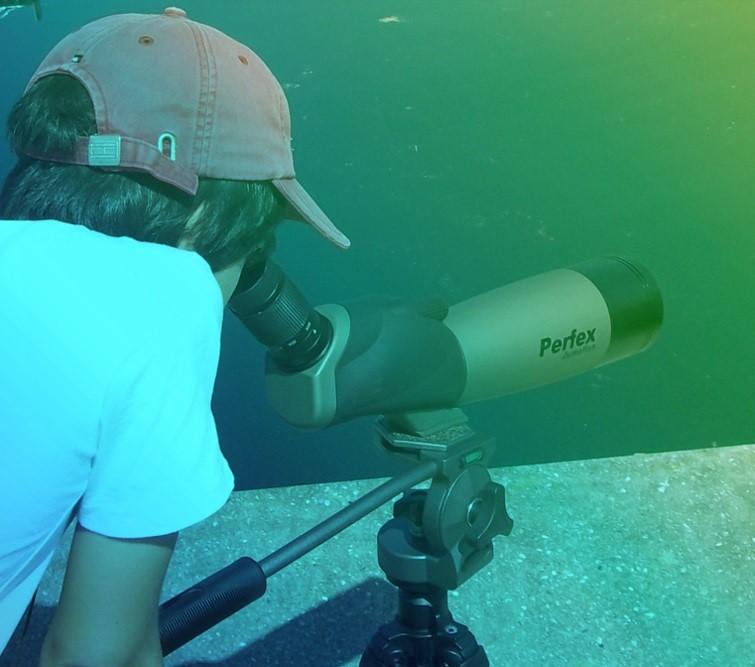aqualis - apprendre à utiliser une longue vue