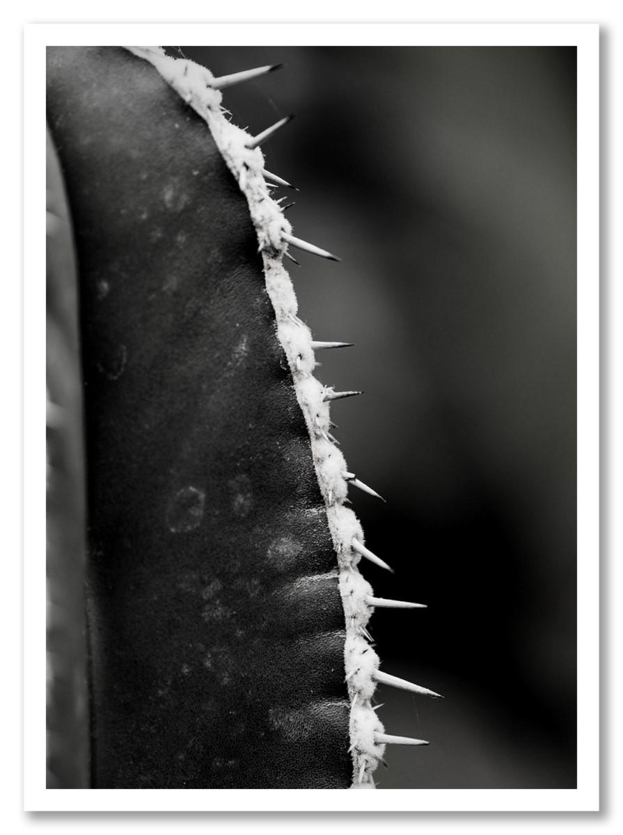 Cactus - Minimaliste Noir et Blanc