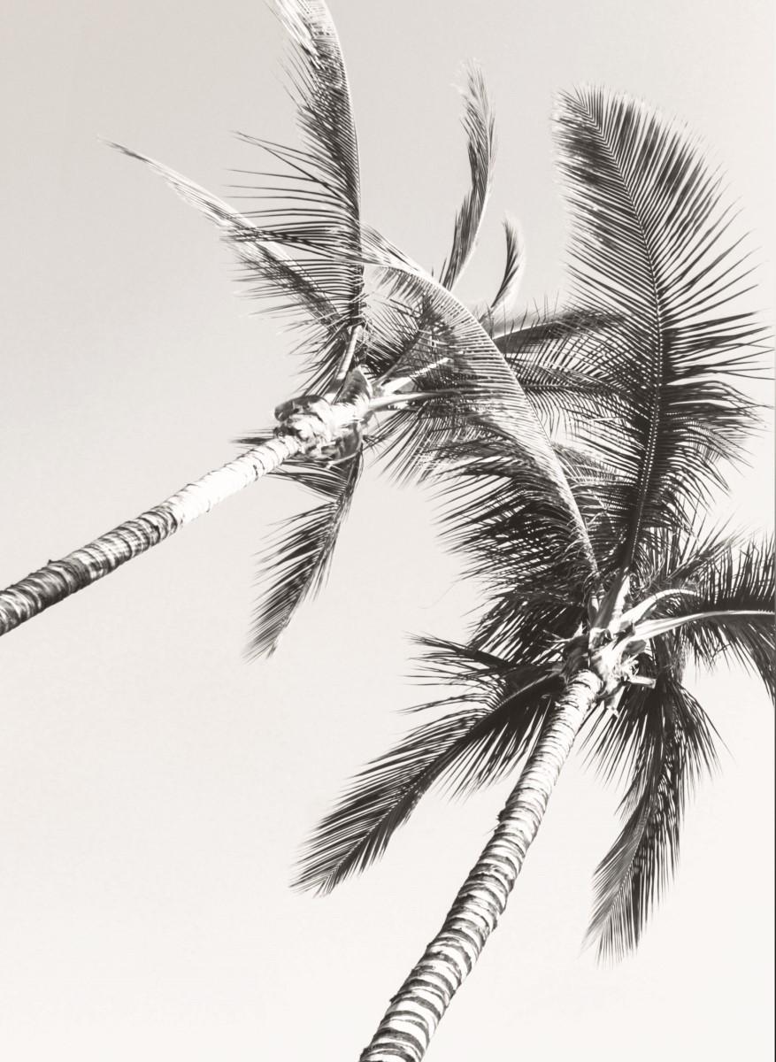 Nature - Palmier sombre