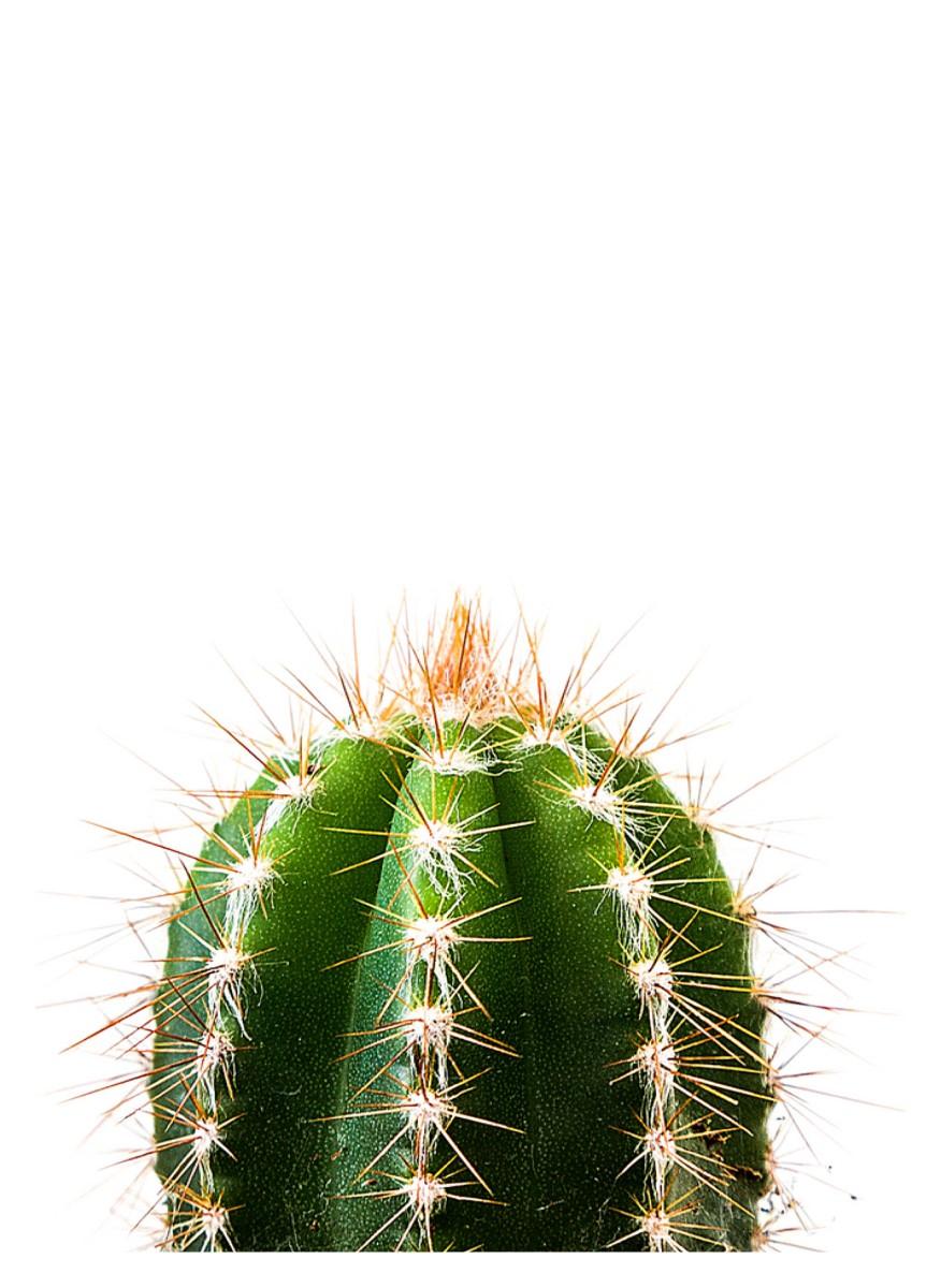 Nature - Cactus Le Minimaliste Vert